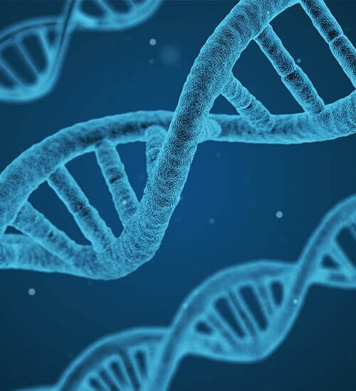 genetics_opt